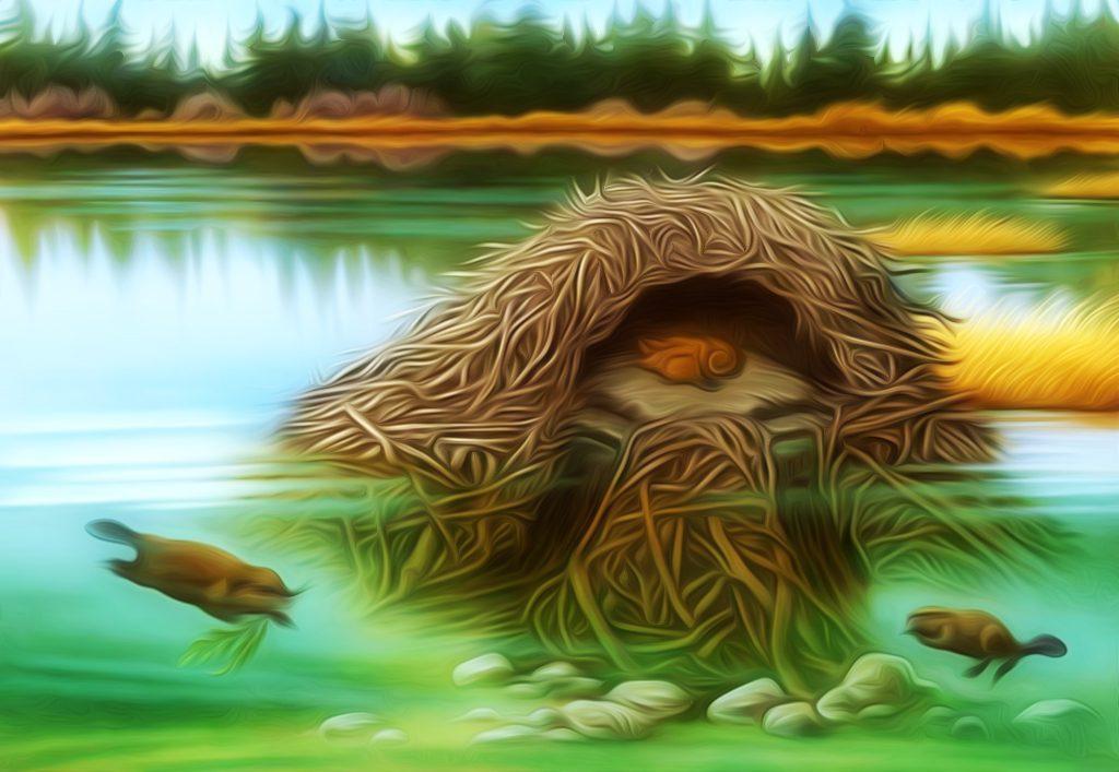 beaver-verkfraedi